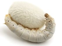 Silk Cocoons with Silkworm. On white background Royalty Free Stock Photos