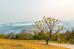 Silk Cotton flower tree Stock Photos