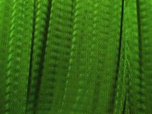 Silk drapes. Beautiful vertical green silk drapes Royalty Free Stock Images