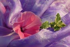silk för blommaonmpink royaltyfri foto