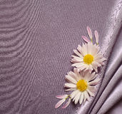 Silk fabric with daisies Stock Photography