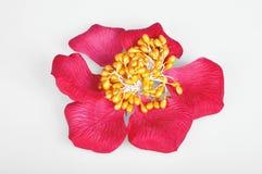Silk flower Stock Photo