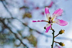Silk Glasschlackenbaum-Blumenhintergrund Stockfotografie