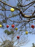 Silk lanterns in a tree with blue sky Stock Photos