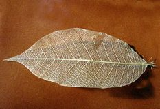 Silk Leaf. On a brown table Asian Look Stock Photo