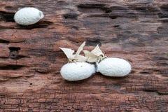 Silk Motte auf Silk Kokon lizenzfreie stockbilder