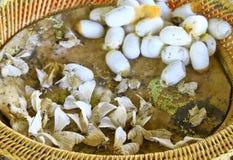 Silk Motte und Kokons Lizenzfreie Stockbilder