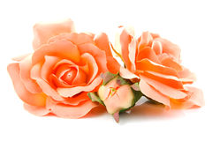 Silk orange roses. Isolated on white background royalty free stock image