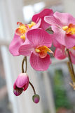 Silk orchid flowers Stock Photo