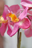 Silk orchid flowers Royalty Free Stock Photography