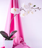 Silk orchid and lamp Royalty Free Stock Photos