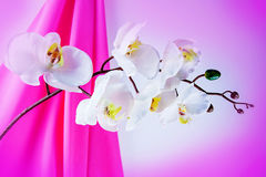 Silk orchid and lamp Stock Image