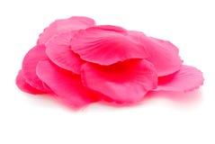 Silk rose petals Royalty Free Stock Image