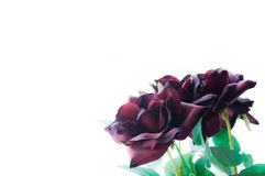 Silk Roses. Deep cherry colored red silk roses isolated on white background Royalty Free Stock Photos