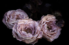 Silk roses Stock Photography