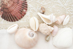 Silk and shells. Sea shells on fine silk background Royalty Free Stock Image