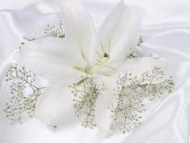 silk white för lilja Arkivbild