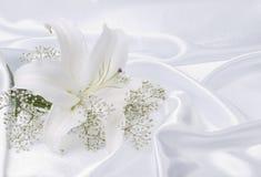 silk white för lilja Fotografering för Bildbyråer
