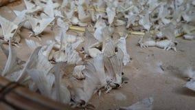 Silk worm moth stock photos