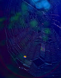 Silken Web of Light. Orb web reflects and refracts the brilliant afternoon sun Royalty Free Stock Images