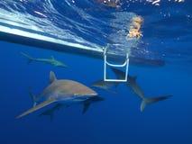 Silkeslena hajar i klart blått vatten, Jardin de la Reina, Kuba Royaltyfria Bilder