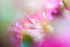 Silkeslena och suddiga blommor för abstrakt bakgrund Fotografering för Bildbyråer