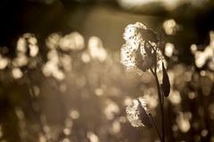 Silkesmask på fältet Royaltyfria Bilder