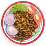 silkworm Immagine Stock Libera da Diritti