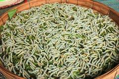 silkworm Photographie stock libre de droits