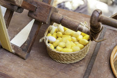 Silkworm cocoons color Royalty Free Stock Photos
