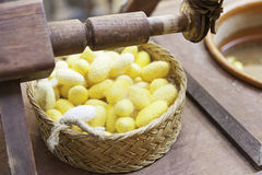 Silkworm cocoons color Royalty Free Stock Image