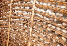 Silkworm cocoons Stock Photo