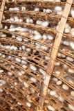 Silkworm cocoons Stock Images