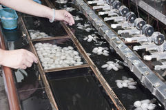 Silkworm Cocoons, Silk Factory, Suzhou China. Silkworm cocoon larvae are processed at a silk factory in Suzhou, China Royalty Free Stock Image