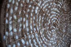 Silkworm. Cocoons in weave bamboo threshing basket Royalty Free Stock Image