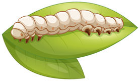 Silkworm. Illustration of a silkworm on a leaf Stock Images