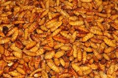 Silkworm larva Stock Images