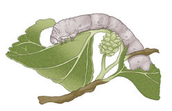 Silkworm. On a mulberry leaf Royalty Free Stock Images