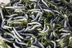 Silkworm mulberry Stock Photo