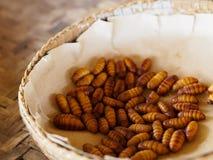 Silkworm pupa Stock Image