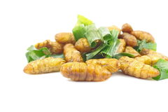 Silkworm pupa fried with green pandan leaf isolated Stock Photos