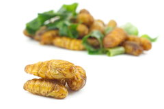 Silkworm pupa fried with green pandan leaf isolated Stock Image