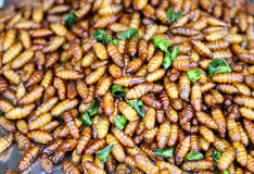 Silkworm pupae, Life cycle of Silkworm fries. Stock Images