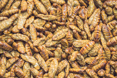 Silkworm pupae pattern for background used royalty free stock image