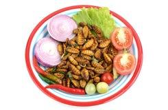 Silkworm pupae, Stock Images