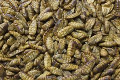 Silkworm pupae. Is thai food in thailand Stock Photography