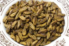 Silkworm pupae. Is thai food in thailand Royalty Free Stock Photo