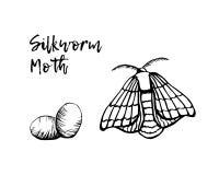 Silkworm sketchy illustration vector Stock Photo