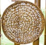 Silkwormkokong förtjänar Royaltyfria Bilder