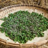Silkworms eating mulberry leaf in tray. Stock Images